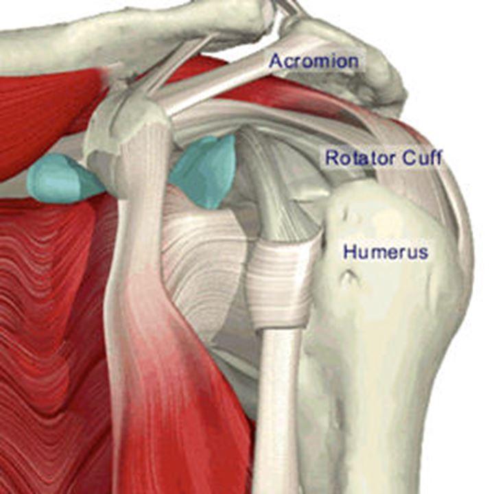 Schulter, Ellbogen & Hand | Orthozentrum - Orthopädische Chirurgie ...